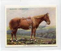 (Jl805-100) Players,Types Of Horses,The Shooting Cob,1939 #19