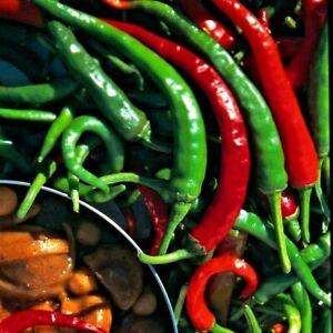 Hot Pepper Cayenne / Chilli - Appx 50 seeds - Capsicum annuum