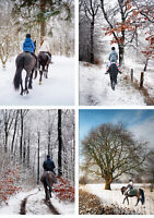 Horse Christmas Cards - Pack Of 12 Xmas