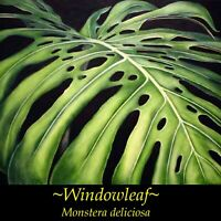 ~WINDOWLEAF~ Philodendron MONSTERA DELICIOSA HousePlant INDOOR Potd small Plant