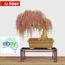 10 X MIXED PURPLE & RARE GOLD WISTERIA BONSAI / TREE SEEDS