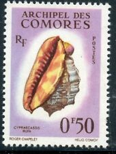 STAMP / TIMBRE DES COMORES N° 19 ** COQUILLAGES