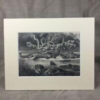 1894 Rettile Stampa Nero Caimano Rettile Coccodrillo Originale Antico