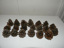 Natural Pine Cones off the Mn Farm Land - Pack of 20
