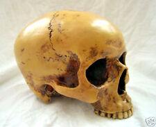 Anatomie Schädel anatomic scull 19cm Markus Mayer Totenkopf