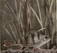 Fish Life Revealed By Camera Book CD 1912 photography