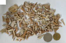 Quantity of SHARK TEETH & Other Fossils From the Moroccan Phosphate mines (U355)