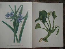 Set of 18 Vintage Mary Walcott Wildflower Prints  Jack in the Pulpit Lily Sedge