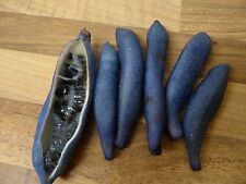 RARE - DECAISNEA INSIGNIS FRUIT TREE  - DEAD MAN'S FINGERS - 25 SEEDS