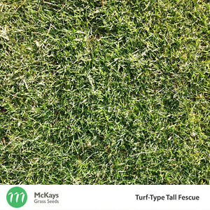 McKays Turf-Type Tall Fescue Lawn Seed - 1kg - Lawn Seed