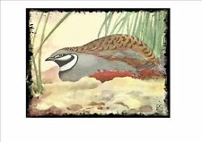 Chinese Painted Quail  Vintage  Wall Plaque Cage Bird Picture Sluis Aviary Sign