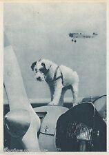 Talisman Süßer Hund mit Flugzeugen AK alt Aeroklub Ceskoslovenske Ceska 1601053