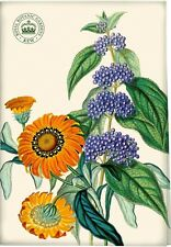 ROYAL BOTANIC GARDENS, KEW Treasure Flower COTTON TEA TOWEL