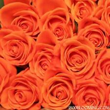 Fresh Cut Orange Roses, Flower Delivery, Bouquet-Event-Party-Diy-B ulk (24roses)