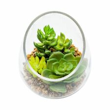 glass clear terraruin vase Succulent Planter wedding decor