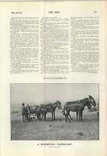 1900 Regimental Water Cart Kicking Mule Cemetery St Govans Chapel