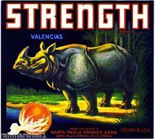 Santa Paula Strength Rhinoceros Orange Citrus Fruit Crate Label Art Print