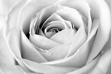 STUNNING Black & White Rose Flower Canvas Picture #847 Wall Hanging Art A1