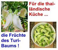 liefert leckere Früchte für die Thai-Küche i! der TURI- oder KOLIBRI-BAUM !i