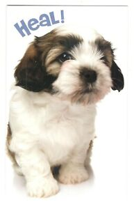 SHIH TZU PUPPY DOG Stockwell Get Well Greeting Card w/ Envelope New MG44
