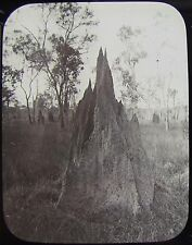 Glass Magic Lantern Slide FLORA & FAUNA NO21 C1890 PHOTO AUSTRALIA SAVILLE-KENT