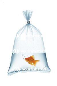 "Plastic Aquarium Fish Shipping Bags Watertight 8"" x 20"" x 2mil 100ct"
