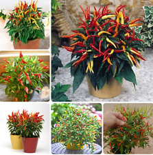 200Pcs Pepper Capsicum Vegetable Seeds Rare Colorful Hot Chili Bonsai For Garden