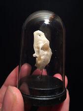 Cabinet de curiosités Taxidermy Globe Crane chauve souris Hipposideros!Bat skull
