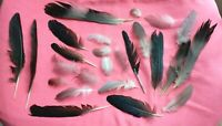 Natural feathers x25 Real FREE FALLEN feathers, Black, grey, white, FREE P&P