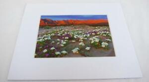 Desert Wildflowers Anza-Borrego CA 5x7 Photograph signed Brian Blackwelder - #26