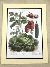 Kitchen Garden Print Chili Peppers Green Cabbage Leaf French Vilmorin Andrieux