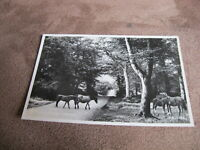 1950s Hampshire real photographic postcard -  New Forest ponies