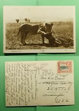 DR WHO 1937 KUT KENYA LION POSTCARD KODAK RPPC TO USA  f52813