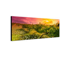 150x50cm Toskana Weinberg Panorama Hügel Sonnenuntergang Leinwand Bild Sinus