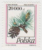 (T6-113) 1993 Poland 20000 pine cones