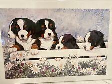 New ListingBernese Mountain Dog Puppies In A Box Ltd Ed Print 11 X14 By Van Loan