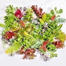 20 Assorted Variety Succulent Cuttings Winter Hardy Terrarium Fairy Garden Sedum