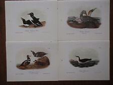 Lot of 40 Audubon Bird Prints - Petrels Puffin Jager Auk Grebe Gannet  - 6