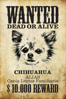 Wanted Hund Chihuahua Blechschild Schild gewölbt Metal Tin Sign 20 x 30 cm