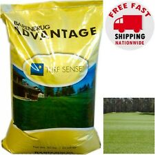50 lb Panterra V OverSeeding Rye Grass Lawn Seed High Tolerant Turf Golf Sports
