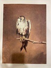 Raymond Ching Falcon New Zealand Wildlife Artist Limited Edition Print