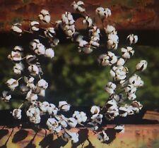 "COTTON Boll Wreath 22"" - 27"" Winter White Wall Farmhouse Rustic Decor Southern"