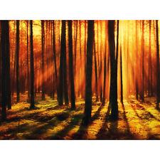 Forest Sunset Nature Photograph Huge Wall Art Poster Print