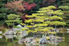 STUNNING JAPANESE ZEN GARDEN LANDSCAPE #362 CANVAS PICTURE WALL ART A1
