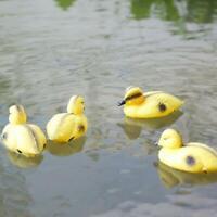 10x 5''Baby Duck Decoy Pond Bird Deterrent Decoration Floating Ornament Bird