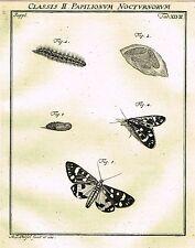 """Rosel's """"Insecten"""" - Copper Engraving - """"PAPILIONUM NOCTURNORUM - XLVII"""" - 1740"""
