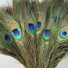 10x 100% Real Peacock Tail Eyes Feathers 26cm Long BOUQUET Wedding Decoration