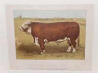 Antique Victorian Farm Print 1890 HEREFORD BULL MAIDSTONE Original Mounted
