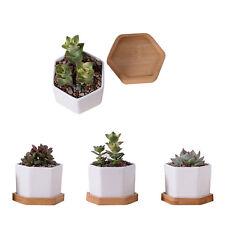 White Ceramic Hexagon Shape Succulent Plant/Mini Flower Pot With Bamboo Tray
