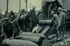 "British Troops Unloading Shells With Jack Russell Dog World War 1, 6x4"" reprint"